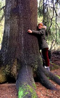 Puunhalaaja-treehugger